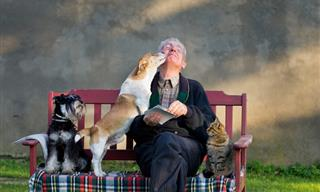 Vivir Con Un Perro o Gato Es Beneficioso Para El Corazón