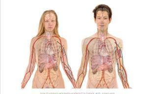 Los Efectos Del Alcohol En Tu Cuerpo