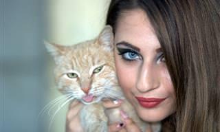 ¿Eres Un Amante De Los Gatos? No Dejes De Hacer Este Test