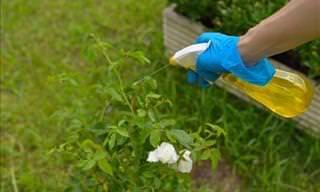 6 Eficientes Pesticidas Ecológicos