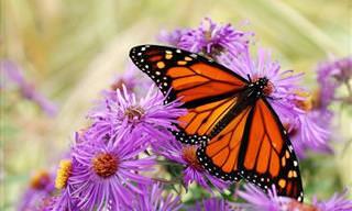 Un Cuento  Acerca De Una Mariposa Saliendo Del Capullo