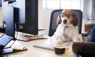 16 Imágenes Adoables De Perros Trabajando Desde Casa