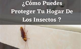 Con Estos Consejos Lograrás Alejar a Los Insectos De Casa