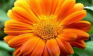 ¿Conoces El Significado Que Ocultan Las Flores?
