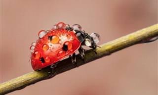 Las Mariquitas Son Los Insectos Más Hermosos De La Naturaleza