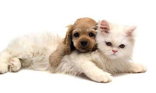¡Llegó El Día Los Adorables Gatitos!