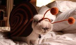 20 Gatos Tratando De Ser Otros Animales