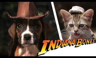 Les Presentamos a Indiana Bones, Un Perro Con Coraje…