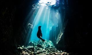 Los Océanos Están Llenos De Maravillas: 14 Fotografías Galardonadas