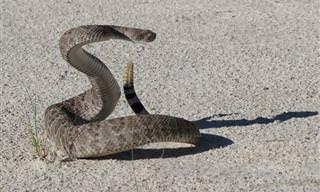 Cómo Sobrevivir a Un Encuentro Con Una Serpiente