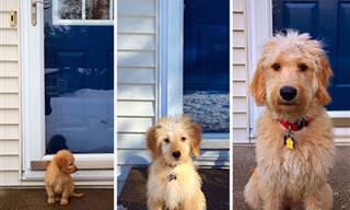 Imágenes Que Muestran El Crecimiento De 20 Hermosos Perros