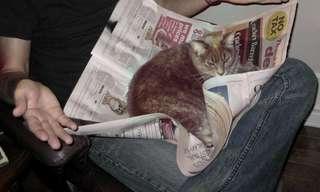 Mascotas Que Se Meten En Medio De Tu Lectura