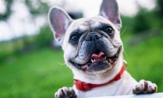 La Ciencia Descubre Porqué Los Perros Son Tan Amistosos