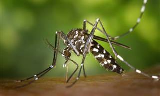 Virus Del Zika: Esto Es Lo Que Debes Saber
