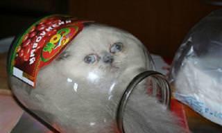 Parece Que Estos Gatos Tienen Serios Problemas