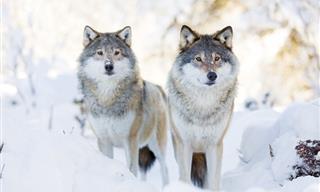 4 Estilos De Cronotipos Animales Que Pueden Mejorar Tu Productividad