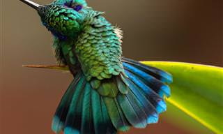 Hermosas Fotos Para Los Amantes De Los Pájaros