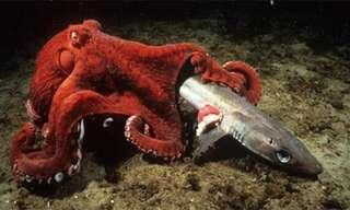 Las 18 Criaturas Marinas Más Grandes
