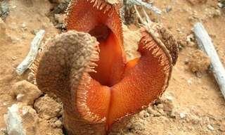 12 Exóticas Plantas Con Talentos Sorprendentes