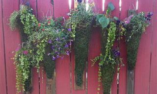 5 Guías Para Iniciarte En La Jardinería Vertical