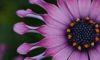 20 Ejemplos De Fotografía Artística Floral