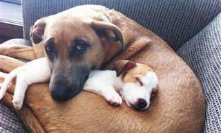 18 Adorables Fotos De Perros Enamorados