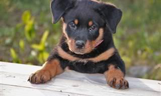 Estos Lindos Perritos Tienen Una Pregunta Para Dios