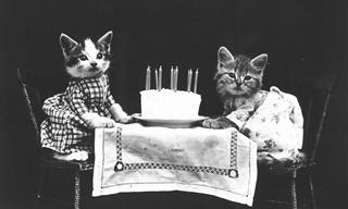 17 Adorables Imágenes Vintage De Perros y Gatos
