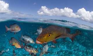 Un Paraíso Escondido Llamado Aldabra