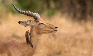15 Fotos Increíbles De Animales Fabulosos y Lindos