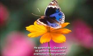 Estas Mariposas Traen Conmovedores Mensajes
