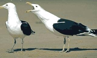 ¿Cómo Determinar El Sexo De Las Aves?