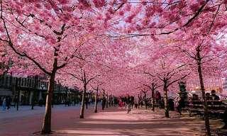 Un Recorrido Por 15 Hermosas Calles Florales