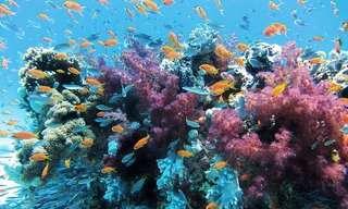 Videos De Asombrosas Criaturas Marinas