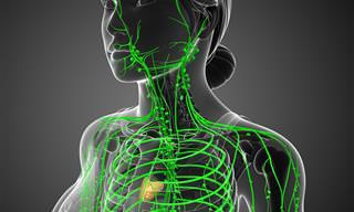 Cómo Mantener La Salud Del Sistema Linfático