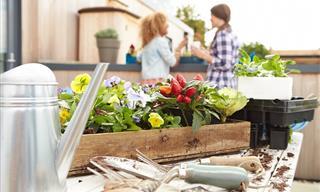Guía Completa Para Cultivar Un Huerto En Casa