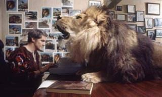 ¡Así Es Tener Un León Como Mascota!
