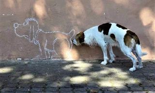 Hacer Fotos a Tu Perro Es La Nueva Forma De Entretenimiento