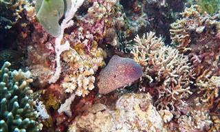 Isla Apo: Una Fantástica Aventura De Buceo