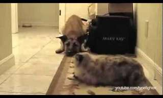 Divertidísimo: ¡No pasarás, perro!