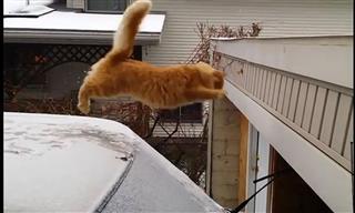 Momentos De Gatos Saltando Bastante Confiados
