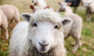 Divertido: Ahora Hasta Los Animales Gastan Bromas...