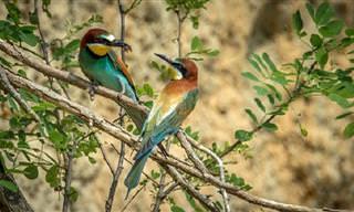 Baila Al Ritmo De Estos Pájaros Danzarines