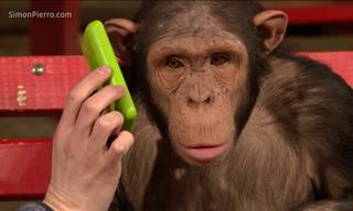 La Hilarante Reacción De Estos Monos a Trucos De Magia