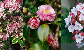 ¡10 Arbustos Florales Para Tu Jardín!