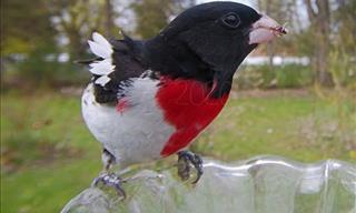 Estas Preciosas Aves Visitan Con Frecuencia El Jardín Trasero De Una Casa