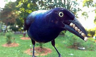 Fotos Espectaculares De Aves Capturadas En El Jardín