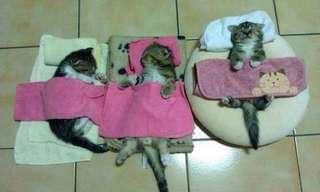 ¡Llegó El Día De Los Gatos!