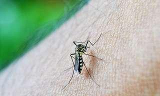 La Cacería De Mosquitos
