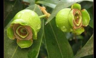 Las Flores Más Exóticas y Hermosas Del Mundo